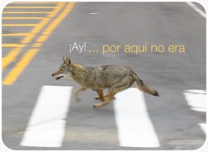 coyoteperdido