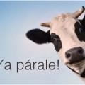 Ordeñando a la vaca sagrada
